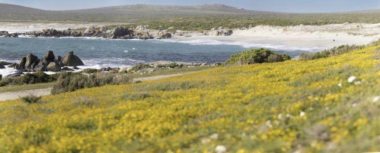 Le lagon de Langebaan pendant la floraison du Cap-Occidental