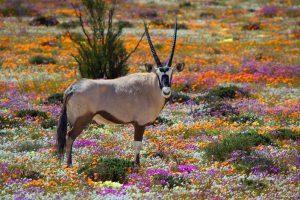Que faire en Afrique du Sud : nos 7 incontournables en photos