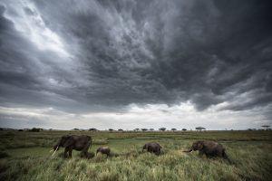 África en imágenes: Dramático paisaje con elefantes