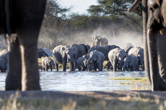 Blick aufs Wasserloch, wo Dutzende Elefanten trinken, vom Versteck der Unterkunft The Hide aus