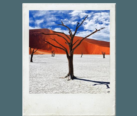 Árvores mortas na região de Deadvlei, deserto Sossusvlei, Namíbia
