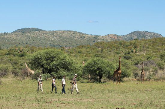 Safari-goers on a bush walk in Madikwe