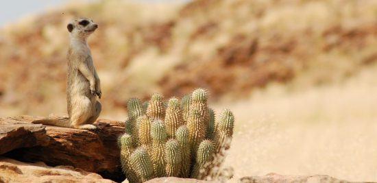 El desierto del Kalahari, uno de los lugares donde ver suricatas es más fácil.