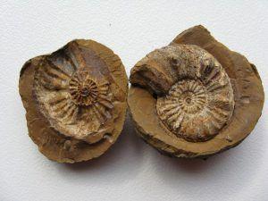 Fossile im West Coast Nationalpark an Südafrikas Westküste