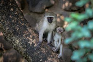 APOTY Photo: Two monkeys pose for a photo