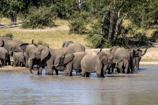 Eine Elefantenherde im Wasserloch