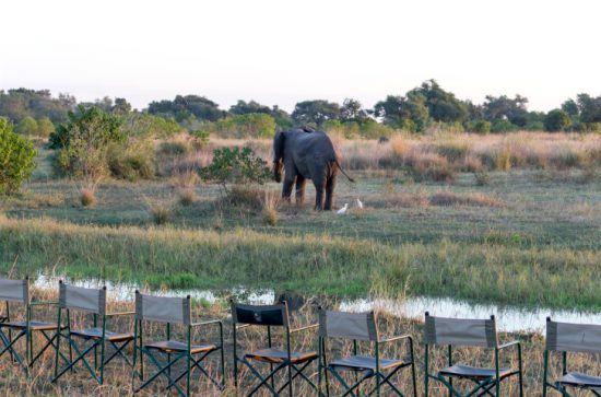 Sundowner in wasserreicher Graslandschaft mit Blick auf einen Elefanten