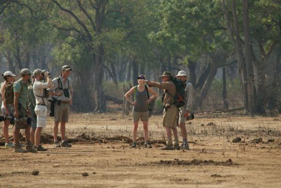 Walking safaris are a Mana Pools speciality
