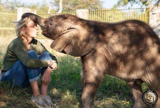 Une jeune femme et un éléphanteau dans le centre de protection animale Hoedspruit Endangered Species Centre.
