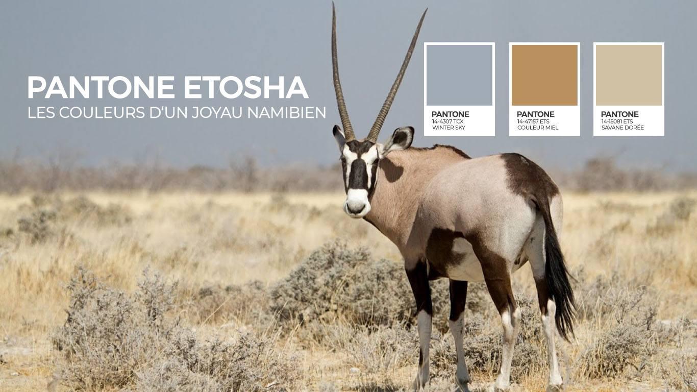 Couleurs Dafrique Le Pantone Detosha Rhino Africa Blog