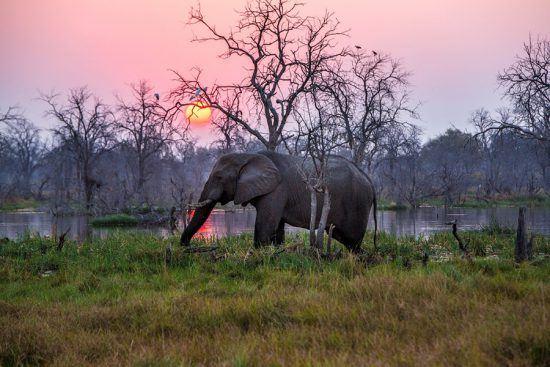 Espere ver muitos elefantes durante sua jornada pelo Botsuana