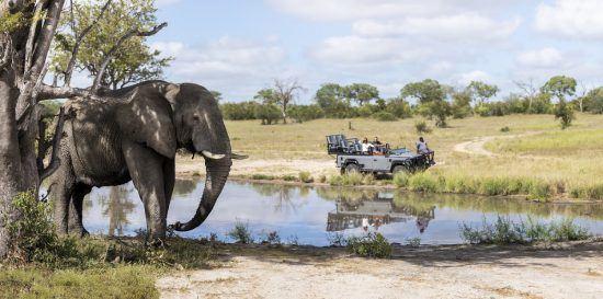 Avistando un elefante en Silvan