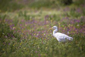 Oiseau blanc dans un champ de fleurs pendant la saison de floraison.