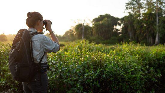 Guide avec des jumelles dans les vertes plaines d'Odzala au Congo.