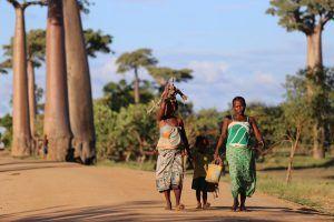 Madagascar se distingue des autres îles de l'océan indien pour ses baobabs.