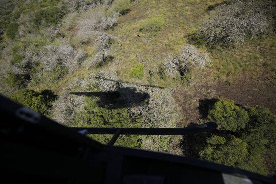 Zahnarzt und Pilot halten Ausschau nach Nashörnern