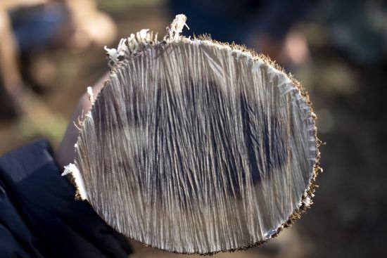 Nashorn-Horn: Wertvoller als Gold