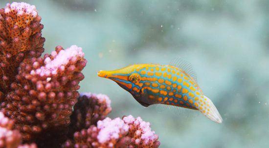 Close-up de peixe colorido na baía de Sainte Anne, Seicheles