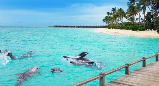 Golfinhos são fotografados perto de deck de madeira nas Maldivas