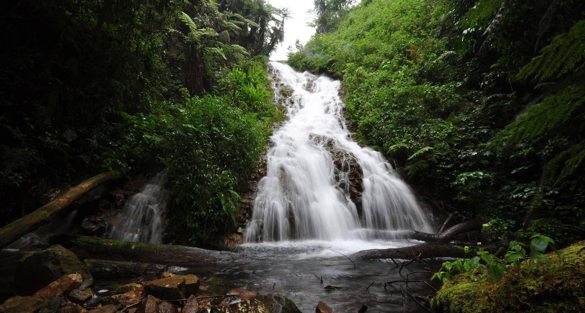 Ein Bach plätschert durch einen dichtbewachsenen Regenwald