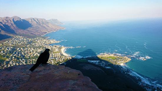 Passarinho observa oceano do topo da Lions' Head, cuja sombra pode ser vista no solo. À esquerda, a cordilheira dos 12 apóstolos
