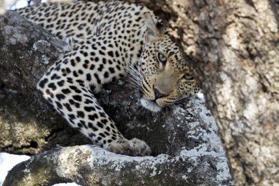 """Los """"peligros"""" del Parque Nacional Kruger, en Sudáfrica"""