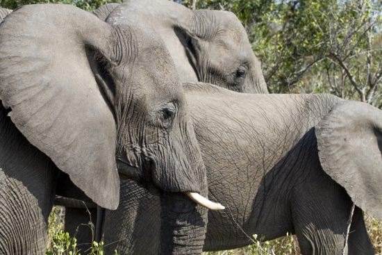 A herd of elephants in the Kruger National Park