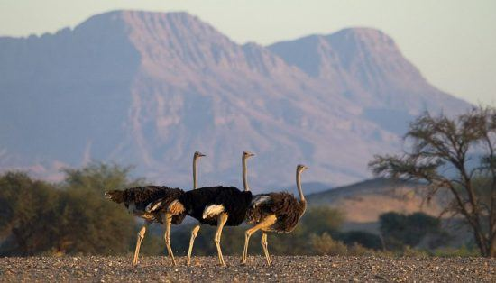 One of the many treasures of the Namibian wild