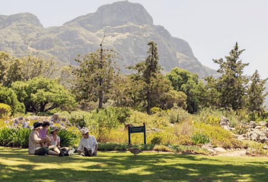 Piqueniques em Kirstenbosch são agraciados por uma ampla variedade de plantas e flores
