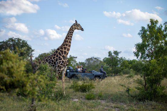 Afrique australe | Sabi Sand