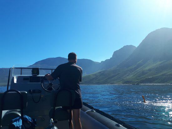 Descubriendo la vida marina sudafricana con Indigo Scuba.