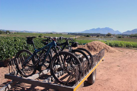 Bicycles lined up at Somerbosch Wine Farm