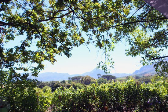 View of Ken Forrester from the wine tasting verandah
