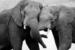 animaux d'afrique du sud