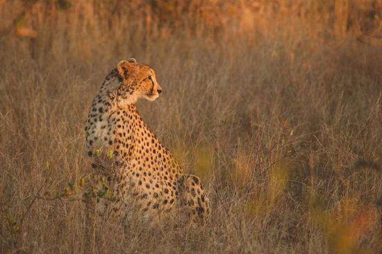 """Los """"Cinco grandes"""" (león, elefante, búfalo, rinoceronte y leopardo) son uno de los grandes atractivos del Parque Kruger."""