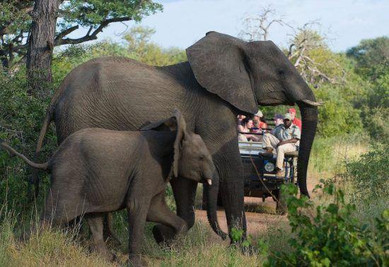Durante tu estancia en el Parque Kruger vivirás multitud de encuentros con la fauna local