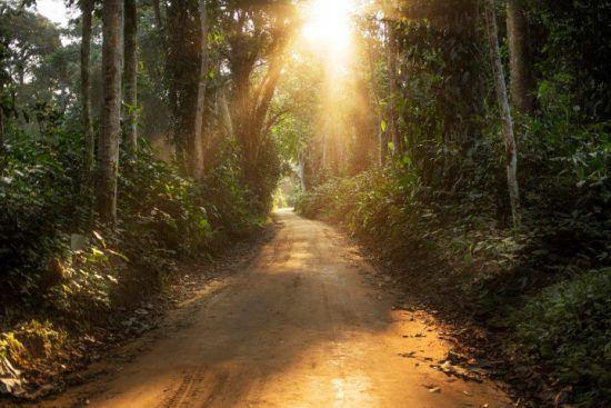 Licht fällt durch den dichten Regenwald auf einen Sandweg