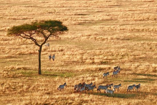 To experience the Great Migration properly, you need to get up close.