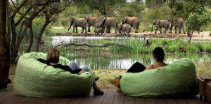 Troupeau d'éléphant au bord de la rivière de Timbavati.