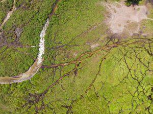 Différence entre le Congo et la RDC | Vue aérienne du Parc d'Odzala-Kokoua