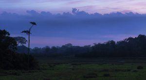Afrique de l'Ouest | Le Parc National d'Odzala-Kokoua au coucher du soleil