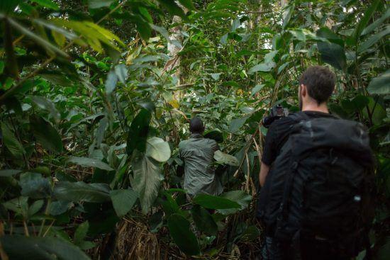 Personen wandern beim Gorilla-Trekking durch den dichten Regenwald