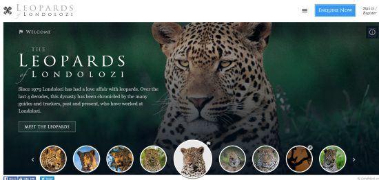 Screenshot der Leoparden-Webseite von Londolozi