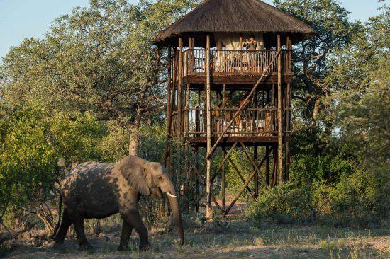 Ein Elefant läuft an dem Baumhaus von Africa on Foot vorbei