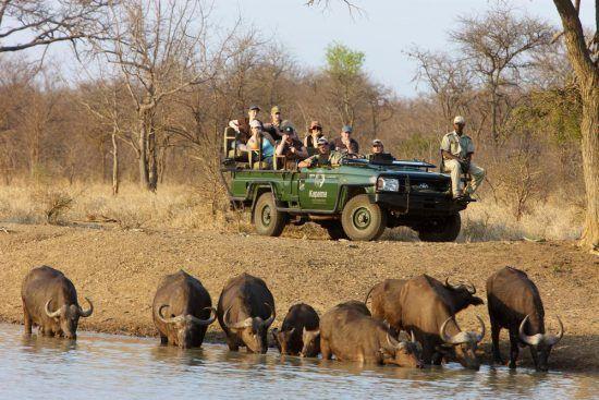 Safari à Kapama | Un safari en voiture au coeur de la vie sauvage