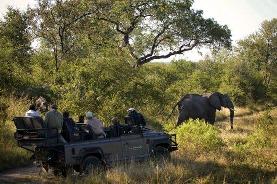Les guides et pisteurs de Lion Sands | Des rencontres magiques sous le soleil d'Afrique
