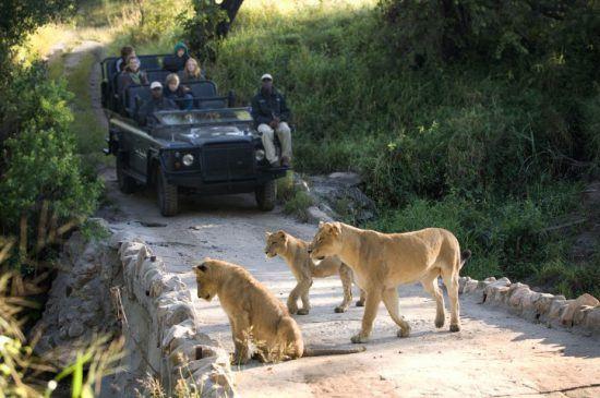 Les guides et pisteurs de Lion Sands | Safari en voiture accompagné d'un guide et un pisteur