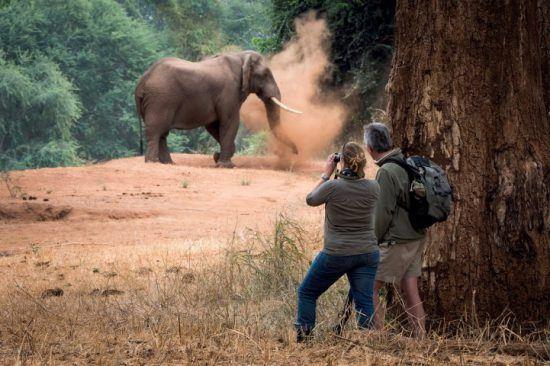 Mann und Frau auf einer Wander-Safari im Krüger Nationalpark beobachten einen Elefanten