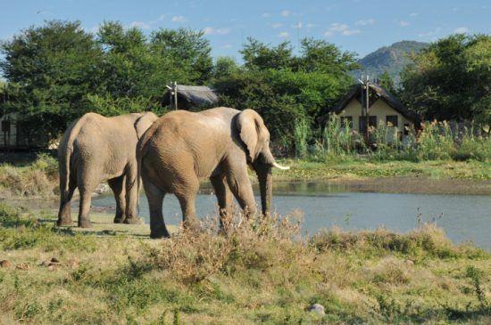 Zwei Elefanten am Wasserloch vor der Tau Game Lodge im Madikwe Game Reserve