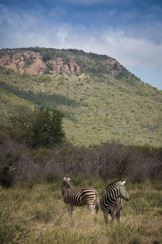 Madkiwe | Safari en Afrique du sud sans paludisme